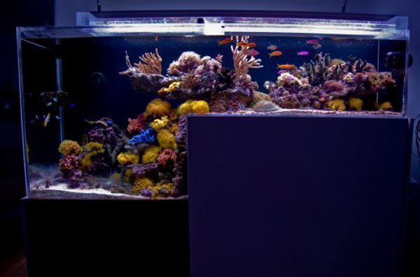 10 best images about saltwater tank ideas on pinterest for How to start a saltwater fish tank