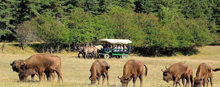 Infos et accès à la réserve biologique, tourisme écologique France avec Haut…