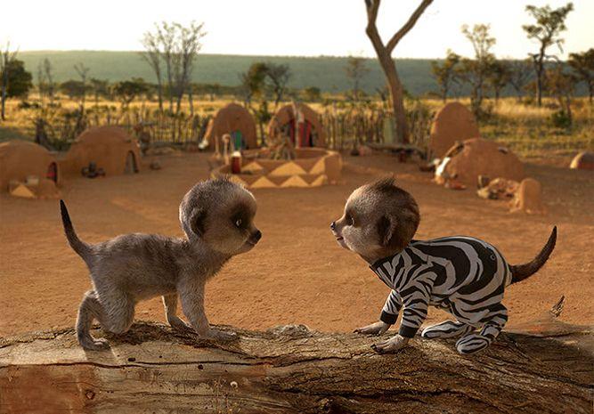 Aleksandr's African Safari Journal | Compare The Meerkat