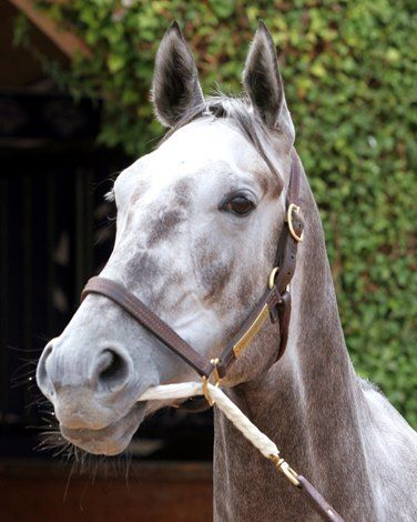 Unique Bella and Paradise Woods will put their raw ability to testagainst six other rivalsin the Dec. 26 La Brea Stakes (G1) at Santa Anita Park.