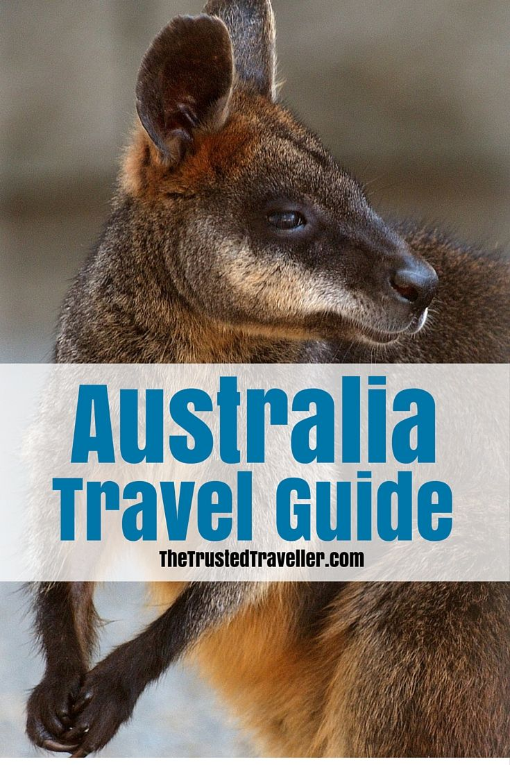 Who wants to see and get up close with wild kangaroos in Australia? Our Australia Travel Guide has everything you need to start planning your trip. Click through now to start planning!