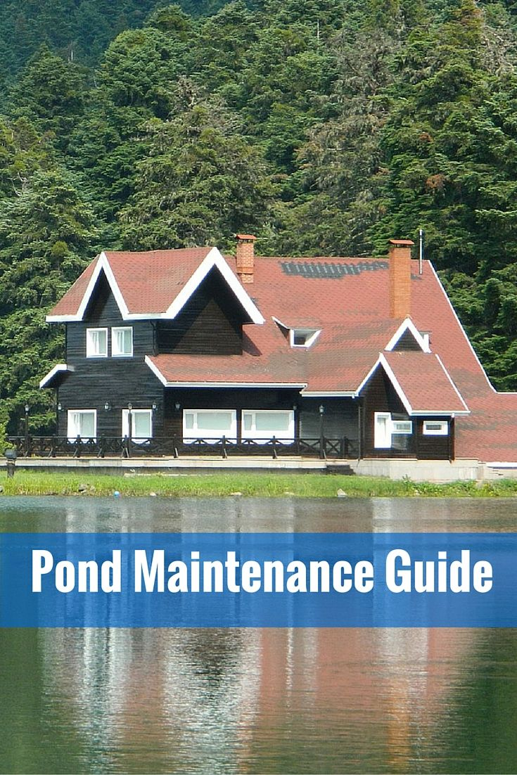 Spring is in full swing and it's the time to clean and get your pond ready. Here is a brief step by step spring #pond #maintenance guide for beginners