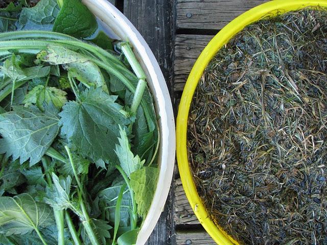 natural homemade fertilizer