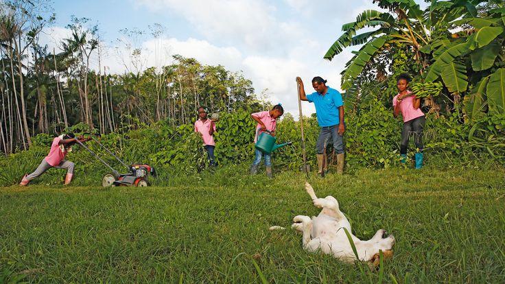 SURINAME - Leerlingen van het Maria Internaat uit Paramaribo bewerken het kostgrondje dat het internaat buiten de stad heeft aangelegd.