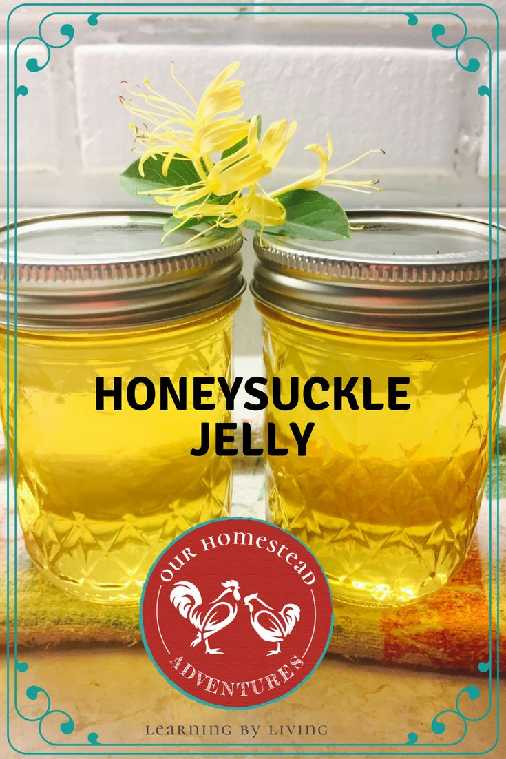 We cannot wait until the honeysuckles come back. This honeysuckle jelly recipe i…