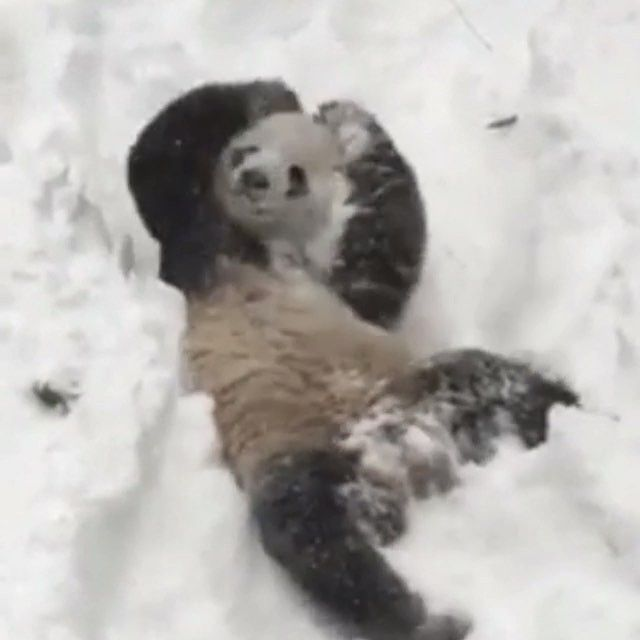 🐼☃Who wants to play in the snow?☃ 🐼