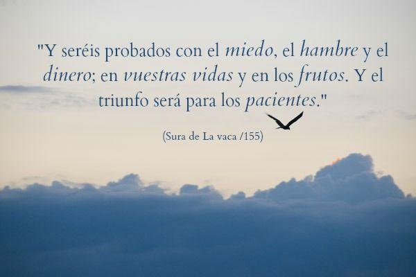 Coran; Quran; Islam; Allah; paciencia; Aves