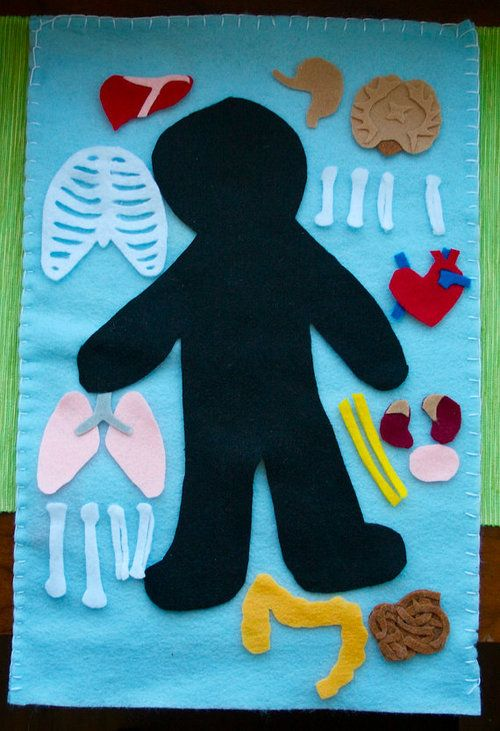 Discover the inside of the human body with this felt board anatomy set. Explore different organs and how they fit together to create organ systems. Overlay the pieces to see how different systems fit together and learn how the inside of your body works.    Source:http://www.etsy.com/listing/97682600/human-anatomy-felt-board-organ-systems