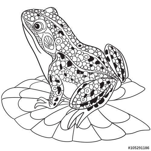 Zentangle frog coloring page … Más