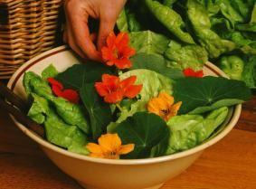 Salade de laitue avec des fleurs de capucines<br />C. Hochet - Rustica