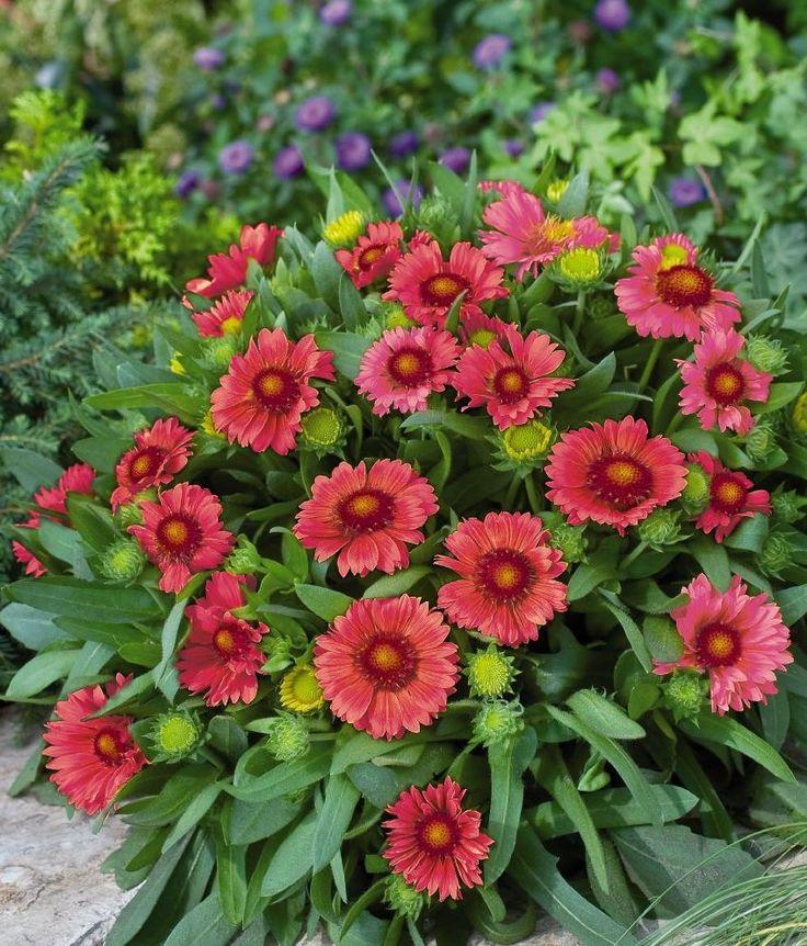 215 best landscape plants - wi northwoods - zones 3-4 images on