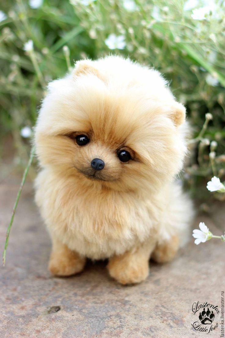 Купить Кейк - бежевый, шпиц, померанский шпиц, щенок, щеночек, щенок тедди, собака, собачка