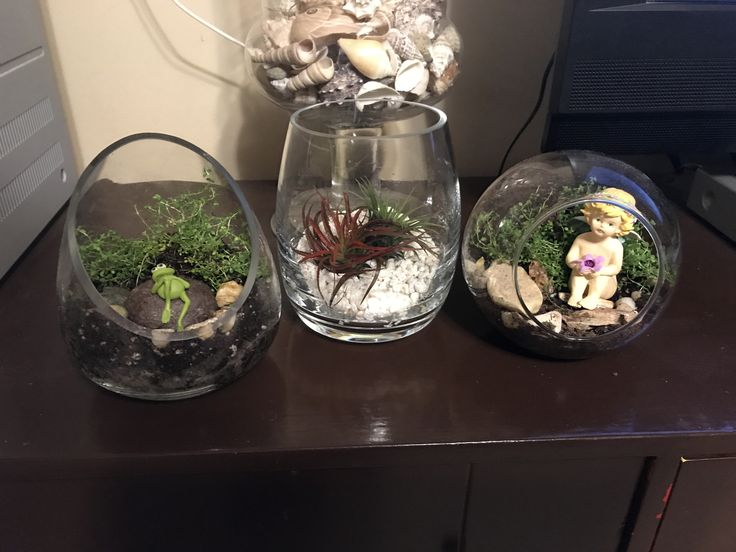 2 Fairy gardens and a beach garden. Using creeping thyme and air plants.