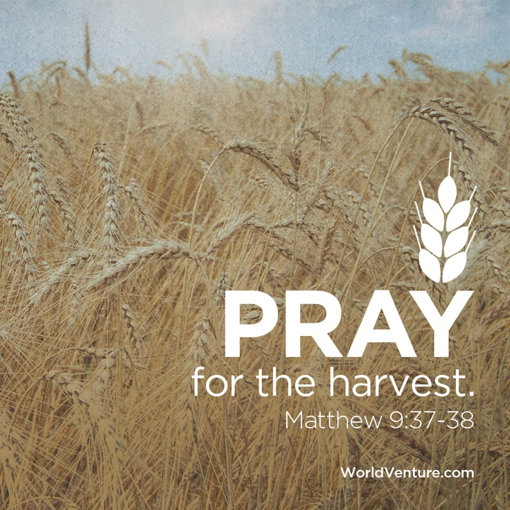 Will you take a moment from your day to #pray for the #harvest? Pray for laborers to be sent!