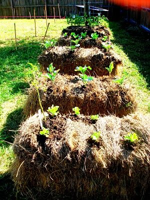 hay bale gardening. Mom always said this is the best way to grow veggies and tomatoes