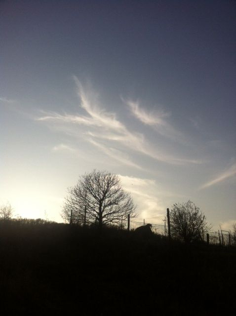 Limbach 2011 sk