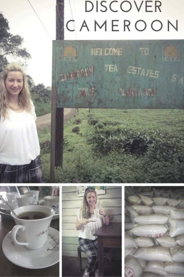 Discover tea platations in Cameroon laughorcry.ie