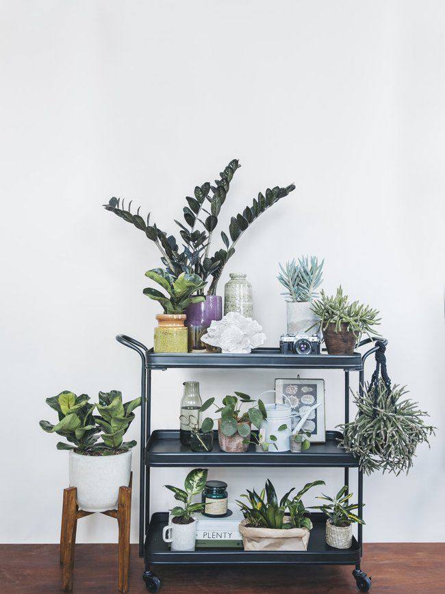What are your #plantgoals this autumn? Thejoyofplants.co.uk