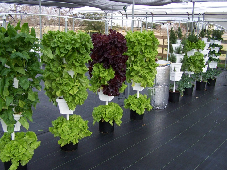 19 best garten und balkon images on pinterest gardening. Black Bedroom Furniture Sets. Home Design Ideas