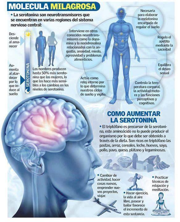 La Serotonina y el Bienestar La serotonina son neurotransmisores que se encuentran en varias regiones del sistema nervioso central y que tienen mucho...