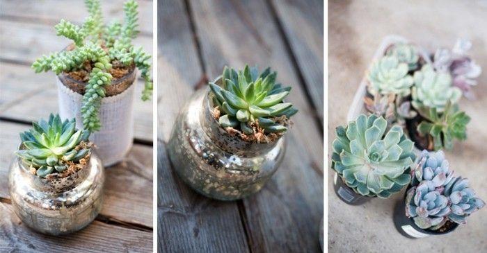 1que-faire-avec-des-pots-de-yaourt-en-verre-terrarium-plantes-terre-banc-en-bois