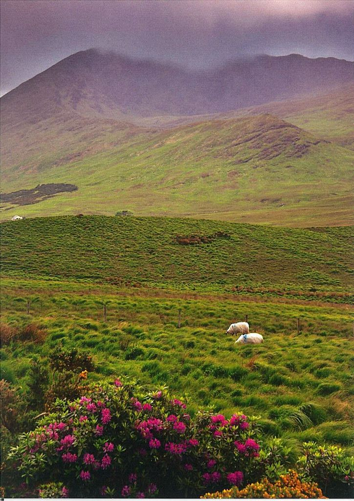 Connemara, Ireland by marja2006-offers on Flickr. http://www.lonelyplanet.com/ireland/county-galway/connemara