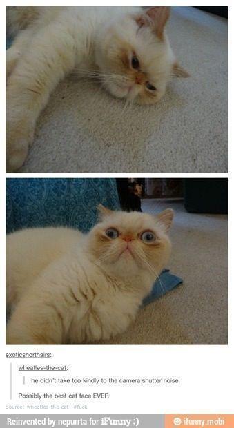 Click here for more funny videos & photos Follow 미미 ♡ .cat.today ————–… – Random – #amp #cattoday #Follow #Photos