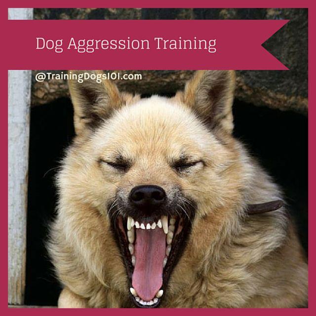 Canine Skill Mastery: Dog Aggression Training