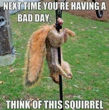 Poor Squirrel: Funny Pics, Funny Animal Pictures, Birds Feeders, Funny Animal Pics, Funny Pictures, Funny Quotes, Funny Stuff, Bad Day, Animal Funny