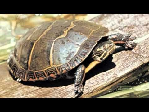 """This short video on classifying animals is the perfect way to kick-off your unit! It'll """"hook"""" your kids for sure! ( It hooked me, I played it twice!)"""
