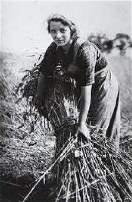 Landarbeidster binden van rogge