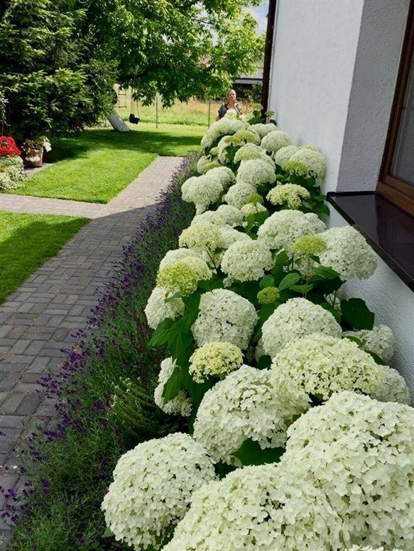 34 Flower Garden Designs For Front Yard Hydrangea Landscaping Yard Landscaping Cool Landscapes