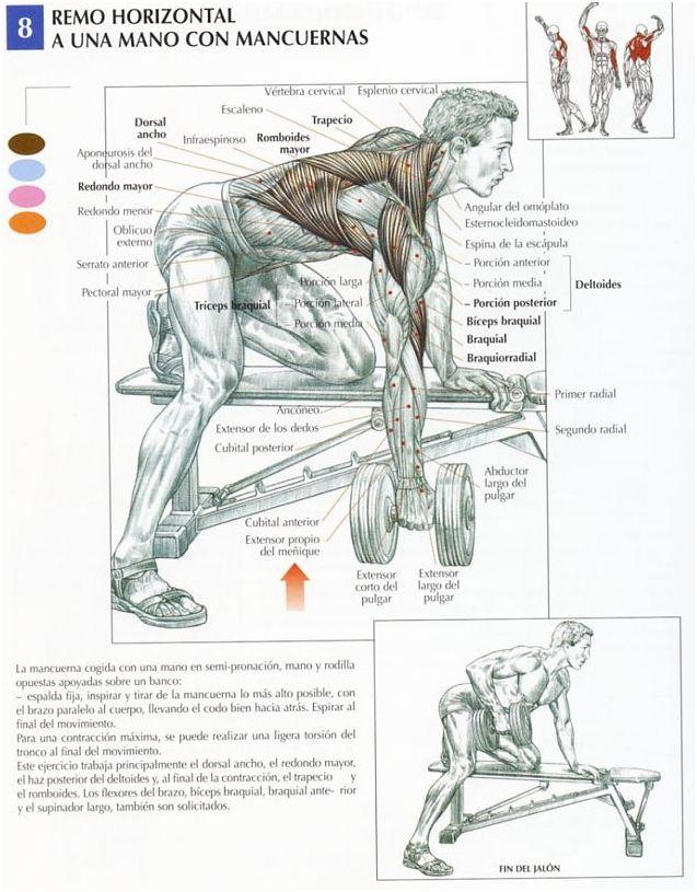 Remo horizontal con mancuerna a una mano - InfoCulturismo.com