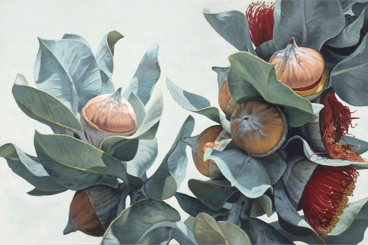 Macrocarpa Gum Flowers 0215 giclee print (on paper/canvas) editions of 15