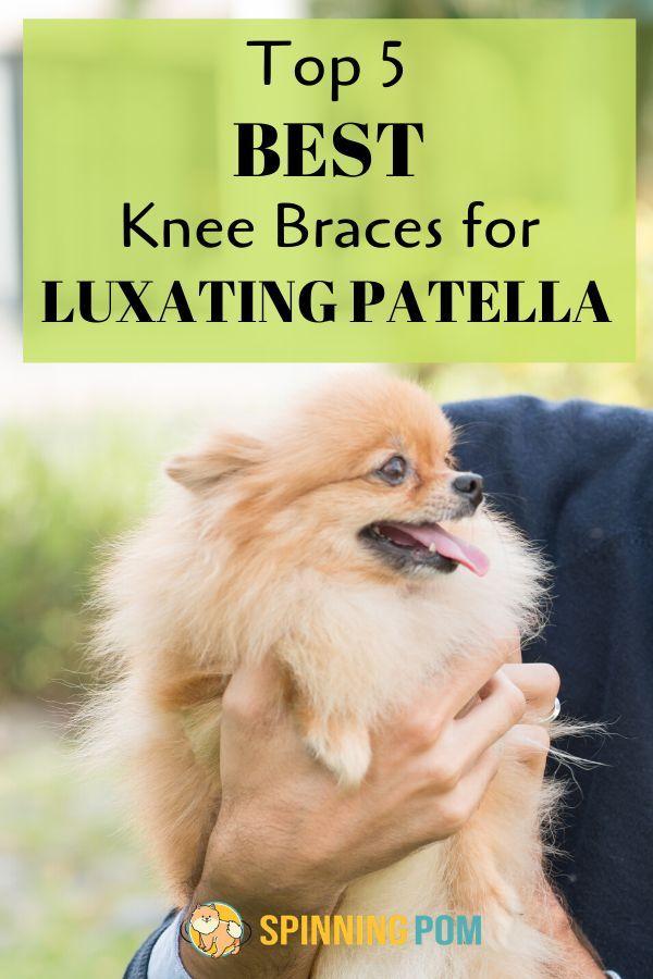 best dog knee brace for luxating patella