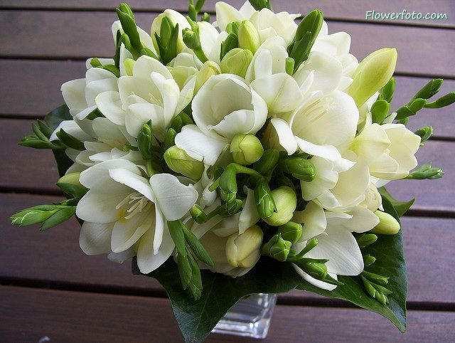 50 best flowers images on pinterest white flowers bridal bouquets white freesia wedding bouquet mightylinksfo