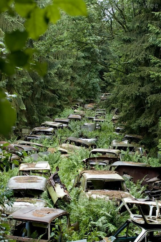 the world after us : Abandoned wrecking yard. Looks like a traffic jam that got trapped in time.