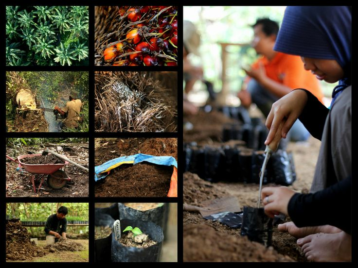 From Illegal palm oil plantation to a regenerating rainforest