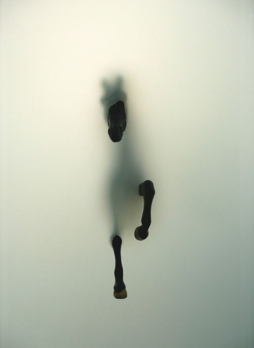 horse/fog