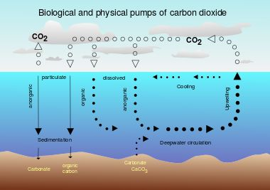 Carbon dioxide in Earth's atmosphere - Wikipedia, the free encyclopedia