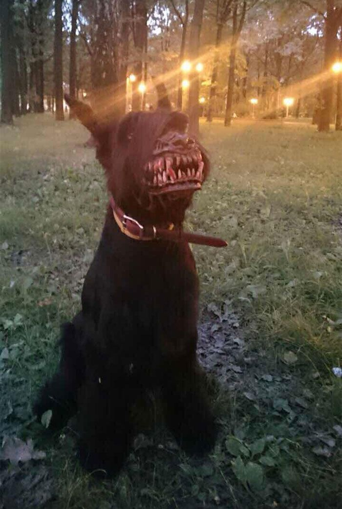 Walking Your Dog In The Woods With Werewolf Muzzle : http://theawesomedaily.com/walking-your-dog-in-the-woods-with-werewolf-muzzle/ #dogs #animals