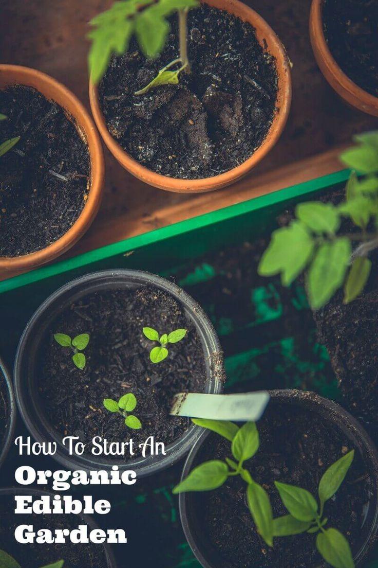 How To Start An Organic Edible Garden   Family Focus Blog