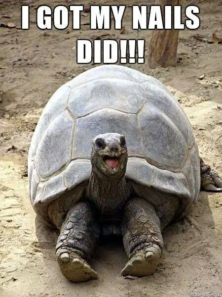 When you're nails are done, you feel as happy as this turtle.. until it chips…