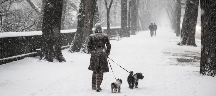 A walk through Central Park on a snowy morning