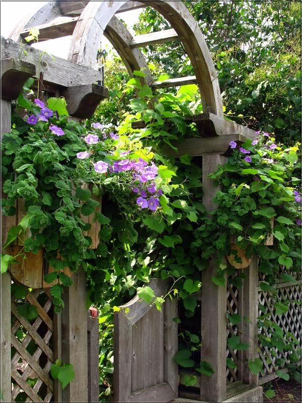 260 Best Garden Gates U0026 Fences Images On Pinterest | Windows, Gardening And  Garden Ideas
