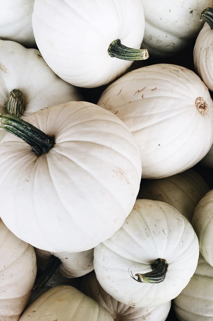"""""""Happy because fall. I never knew how happy white pumpkins could make me. #thelittlethings"""""""