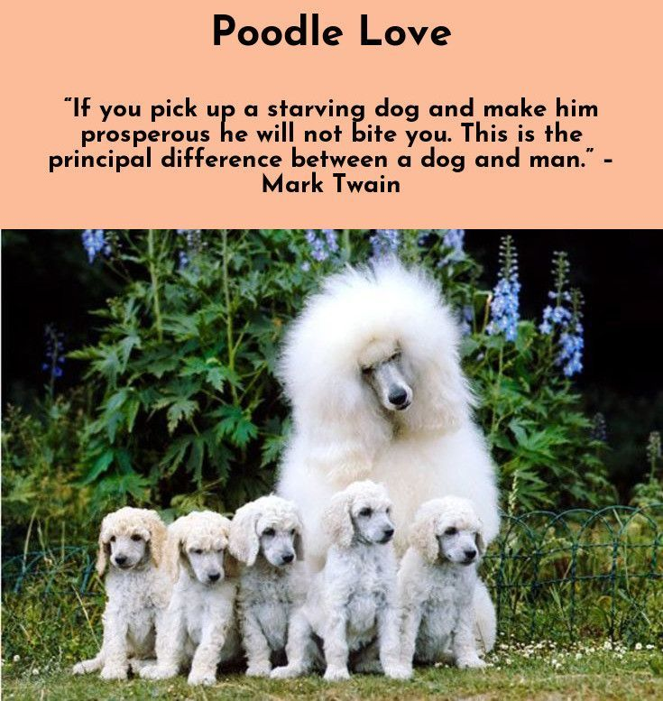 Dogs Lives Are Too Short Their Only Fault Really Agnes