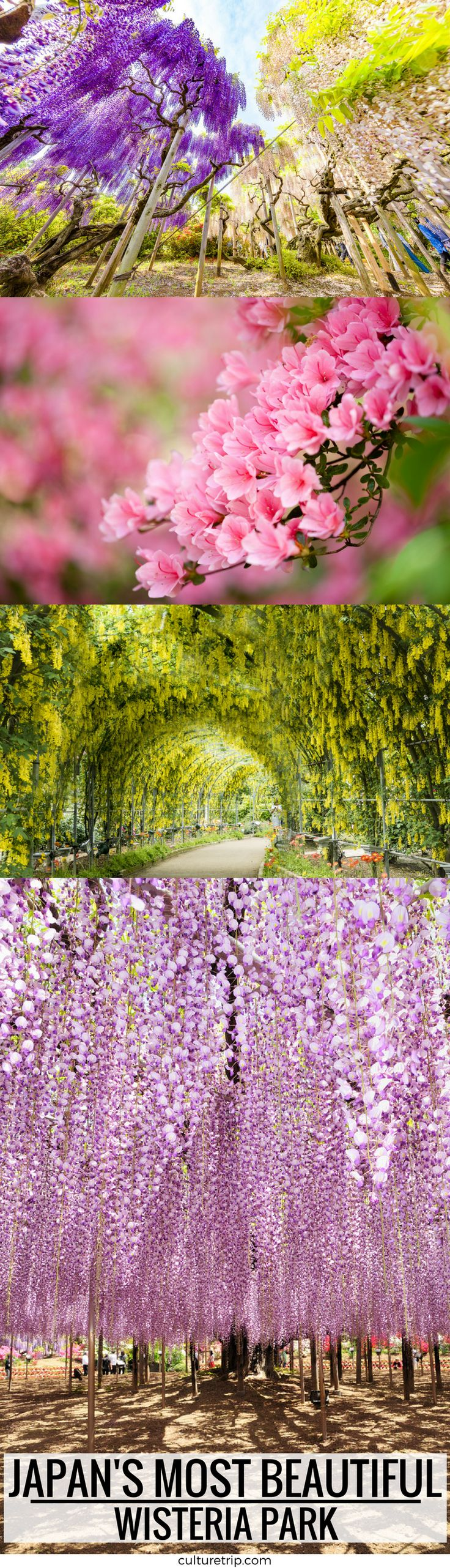 This Japanese Wisteria Park Is The Most Beautiful Thing You'll See Today