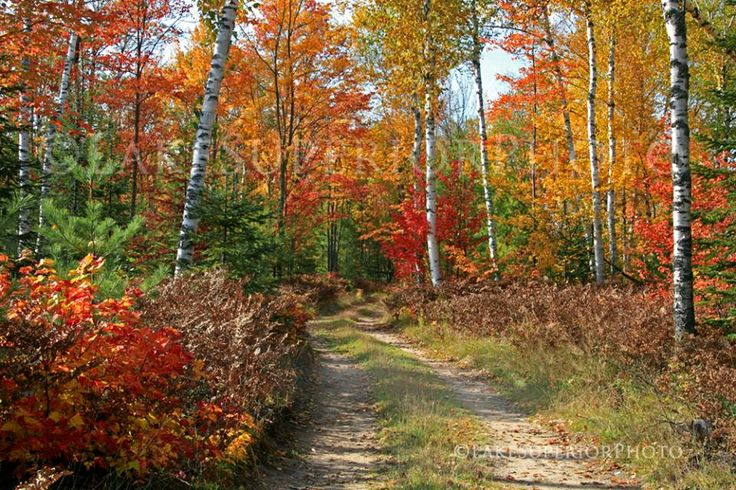 17 Best Images About Michigan S Fall Colors On Pinterest