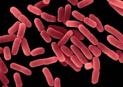 Bacillus Subtilis, de bacterie die reeds gevonden werd bij de oermens in het maagdarmkanaal en volgens wetenschappers gerekend moet worden tot de bacterie die thuishoort in de darm van de mens in plaats van als probioticum gezien moet worden. Aanwezig in Prescript-Assist, het pre-probioticum dat anders is als alle anderen.